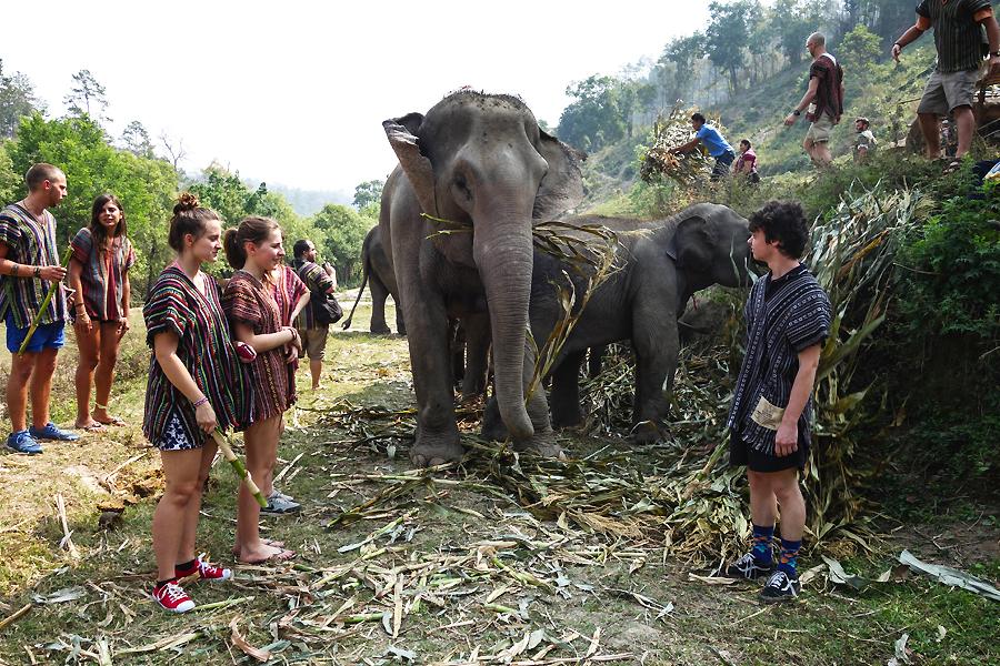 Thailande - bain avec les elephants 1