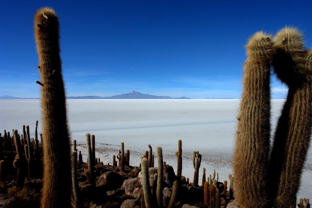 Bolivie - Salar d'Uyuni cactus