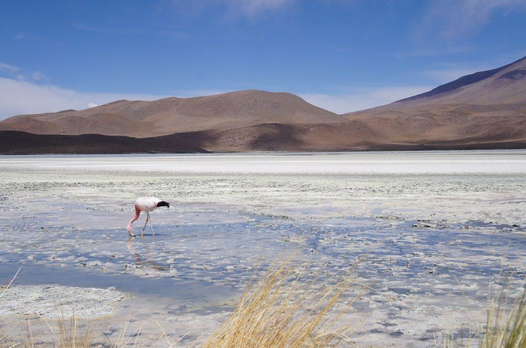 Bolivie - Salar d'Uyuni flamand rose