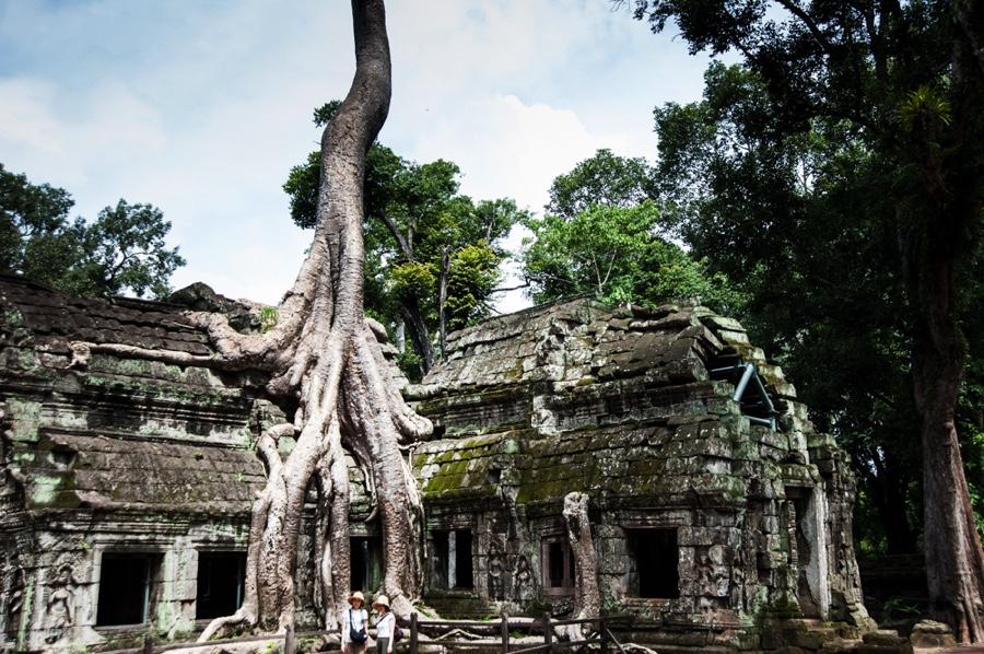 Cambodge - Angkor Ta Phrom