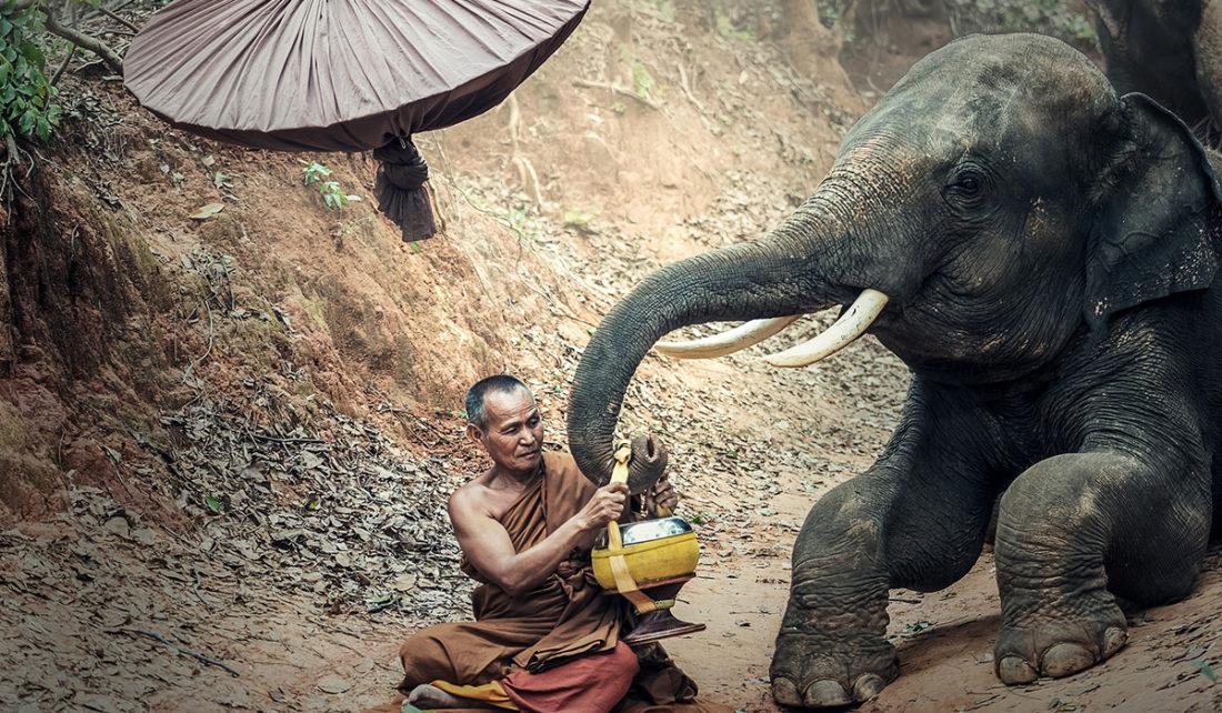 Cambodge - Un homme et un éléphant