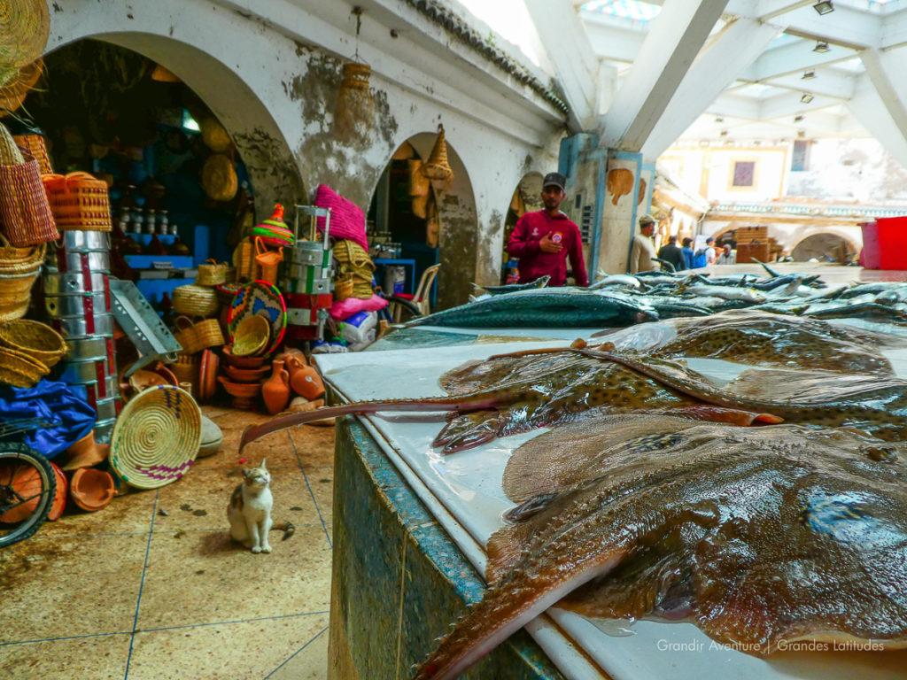 Essaouira, marche aux poissons 5