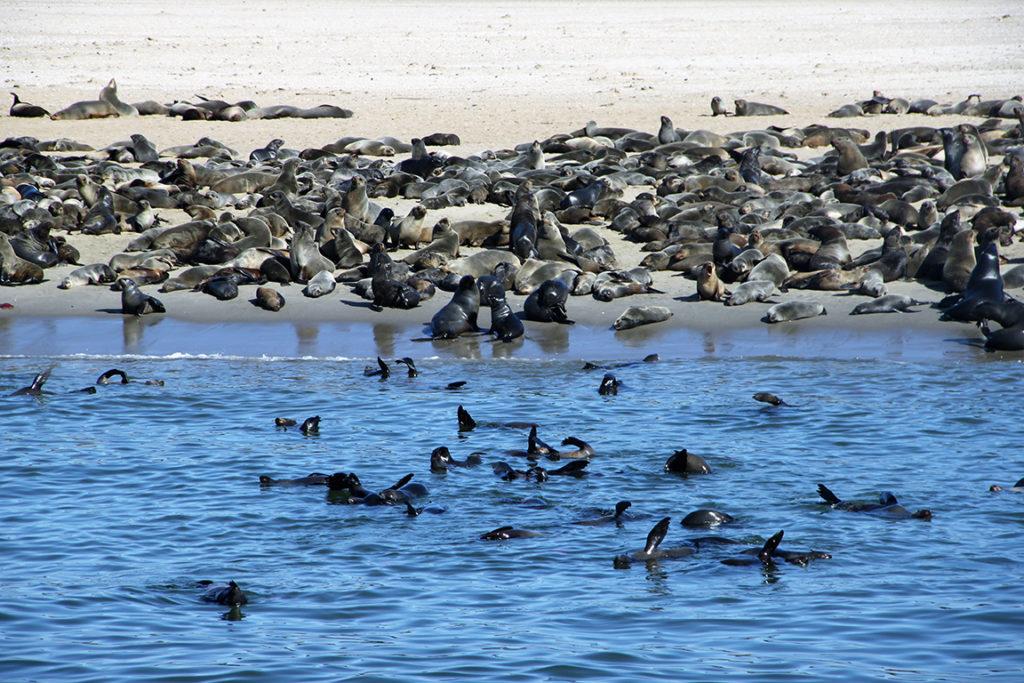 Namibie - Walvis Bay