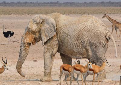 Des animaux en Namibie