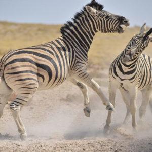NAMIBIE | Été | 15 jours