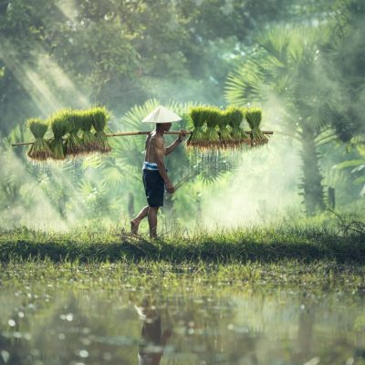Cambodge - agriculture