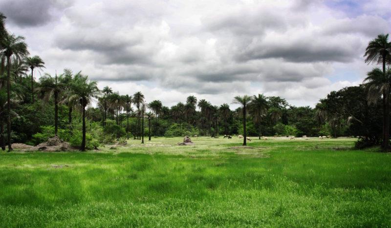 Sénégal - étendue verte