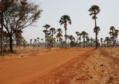 Sénégal - terre rouge