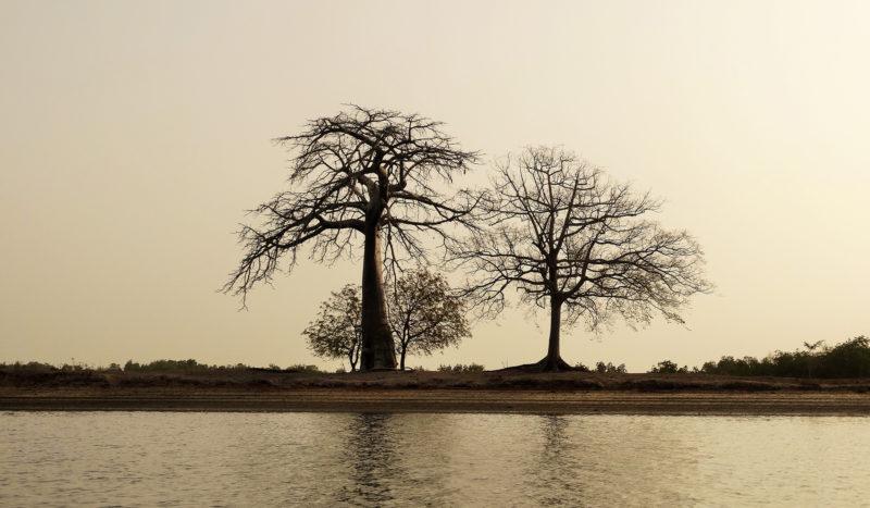 Sénégal - La belle lumière du soir