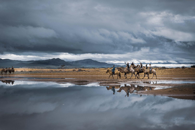 Mongolie - chameaux
